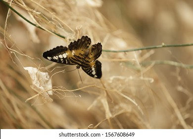 A tropical butterfly sits on a plant