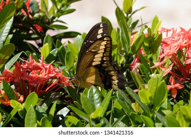 Tropical butterfly within flowers