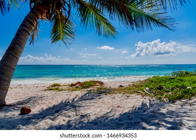 tropical Caribbean panorama in the Mayan Riviera in Mexico with palm trees and white sand