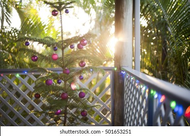 Tropical Christmas celebration with a natural potted pine decorated Xmas tree on an outdoor porch against lush green vegetation and sun flare from the rising sun