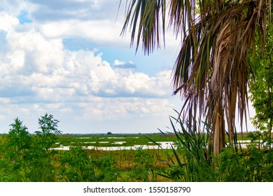 A tropical cloudy view of the marsh