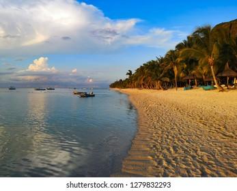 tropical coast with palms