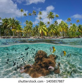 Tropical coast with sea anemones and fish underwater, Tikehau atoll, Tuamotu, French Polynesia, Pacific ocean, split view over and under water surface