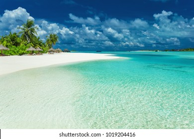 Tropical coastline with palm trees and beautiful sand. Exotic beach scene. Maldives.