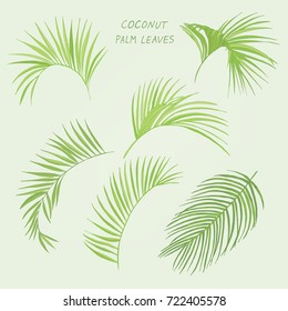 tropical coconut palm leaves hand drawn set