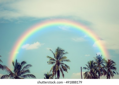 Tropical coconut tree with rainbow. Retro filter