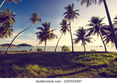 tropical coconut trees on the beach on sunset as background.vintage colour tone style.