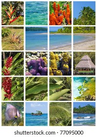 Tropical collage in the archipelago of Bocas del Toro, Caribbean sea, Panama