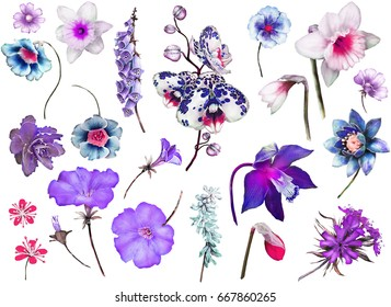 Tropical Collection with plants elements - leaf, flowers. Botanical illustration isolated on white background. watercolor nature. Floral Exotic set with orchid, hibiscus.
