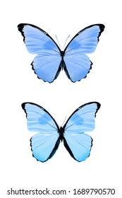 tropical colored butterflies isolated on a white background