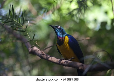 Tropical colorful bird in jungle