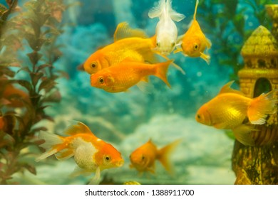 Tropical colorful fishes swimming in aquarium with plants. fish in freshwater aquarium with green beautiful planted tropical