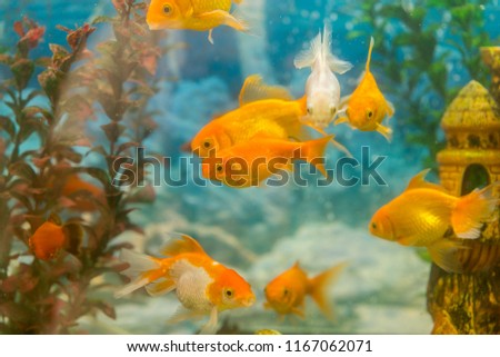 tropical colorful fishes swimming aquarium plants stock photo edit