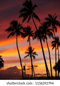 Tropical colorful sunset sky with palm trees silhouette