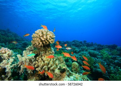 Tropical Coral Reef and Fish