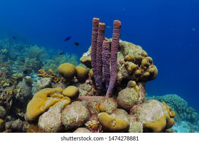 Tropical coral reef with fish and purple sea sponge. Vivid seascape, healthy marine life. Underwater photography from scuba diving on reef. Sponge and aquatic wildlife.