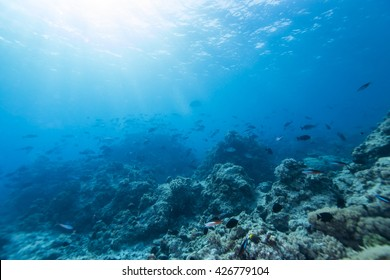 Tropical coral reef and fishes, marine life.