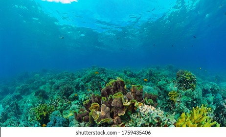 Tropical coral reef and fishes underwater. Hard and soft corals. Underwater video. Panglao, Bohol, Philippines.