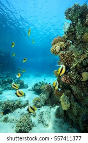 Tropical coral reef in the red sea