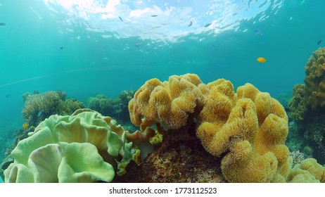 Tropical coral reef seascape with fishes, hard and soft corals. Underwater video. Panglao, Bohol, Philippines.