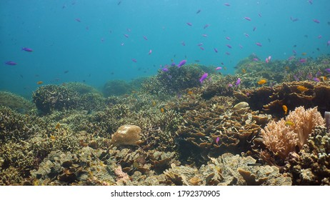 Tropical coral reef seascape with fishes, hard and soft corals. Underwater video. Camiguin, Philippines.