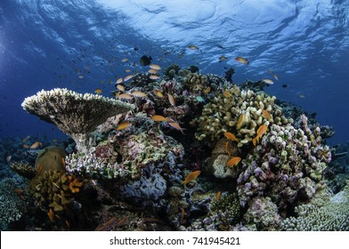 Tropical coral reef seascape with hard and soft corals, South Male atoll, Maldives.