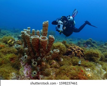 Tropical coral reef and underwater photographer. Scuba diver with underwater camera swimming in the tropical sea. Marine life, colorful seascape and ocean explorer.
