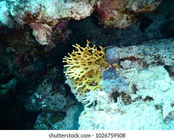 Tropical Coral reef, Underwater shot. Anemones and Soft Corals, Vibrant Colors. Beautiful underwater clip