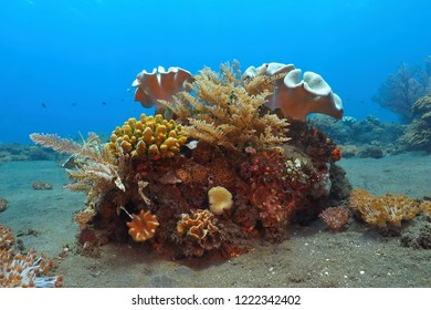 Tropical corals in the blue water. Underwater scenery with reef on the sandy seabed.