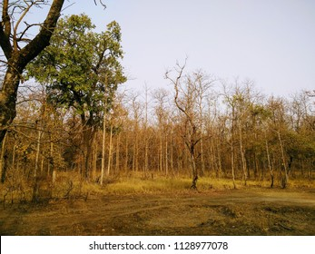 Tropical deciduous forests of central India