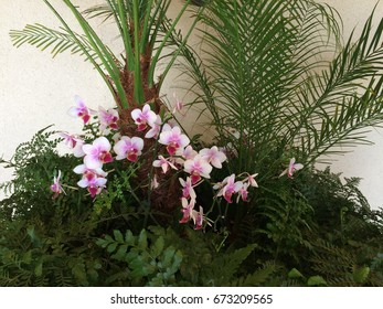 Tropical display of ferns and orchids