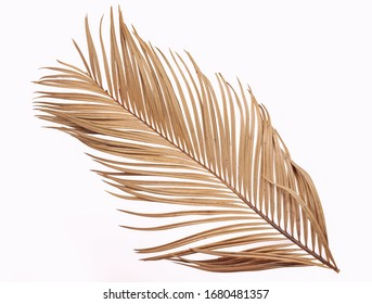 Tropical dry palm leaf isolated on white background
