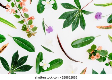 tropical exotic colored leaf pattern on white background. flat lay, top view