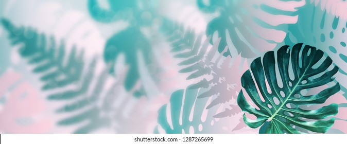 Tropical exotic monstera leaves. Natural floral background.