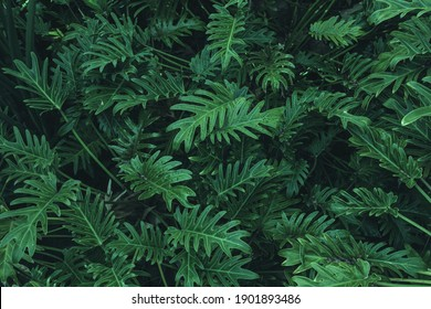 Tropical Fern Bushes. Nature background.