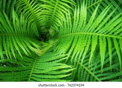 Tropical fern close-up - picture for nature background