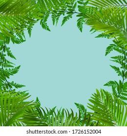 tropical fern leaf on pastel blue background, minimal summer concept, Flat lay