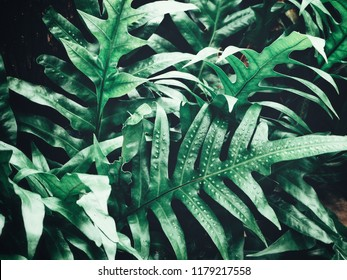 Tropical fern leaves