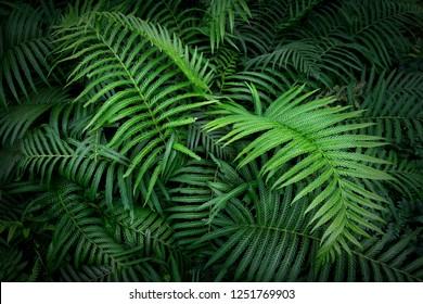 Tropical fern leaves, jungle leaves green pattern background.