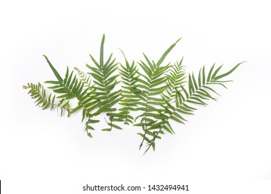 Tropical fern leaves on white background