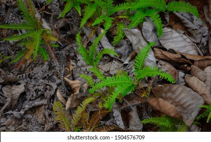 Tropical ferns and dried leaves on the rain forest floor.