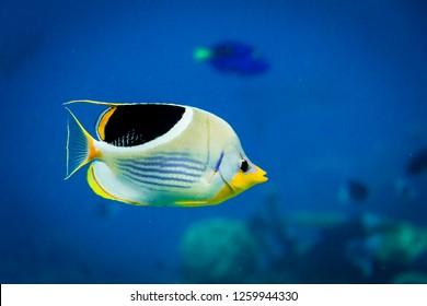 tropical fish in the aquarium at shark bay