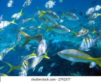 tropical fish in the Bahamas
