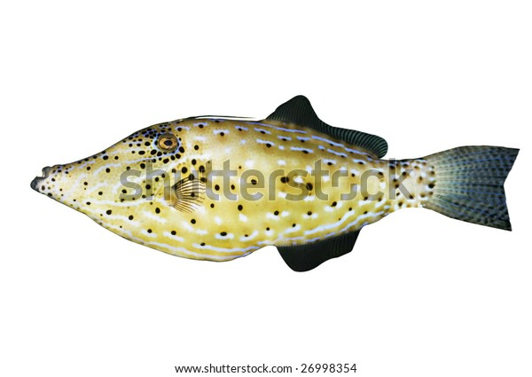 tropical fish with clipping path