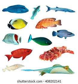 Tropical fish collection on white background.