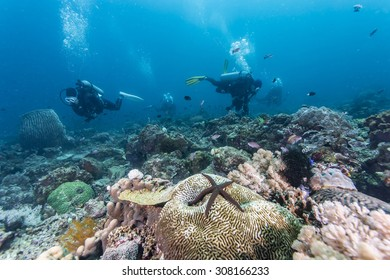 Tropical fish, corals and sponges around a thriving tropical coral reef.