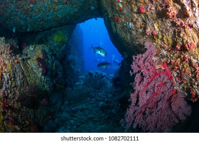 Tropical fish and corals in an underwater cave on a coral reef