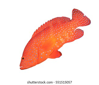 Tropical fish isolated. Coral Trout on white background. Grouper fish cut out
