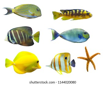 tropical fish isolated on white background. From top to right:  Acanthurus sohal - Sohal Tang, Nimbochromis venustus, Zebrasoma desjardini  Sailefin Tang, Naso vlamingi - Bignose Unicronfish, Zebras