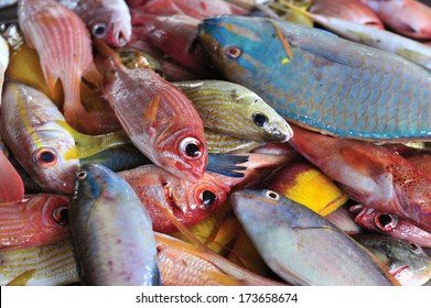 The tropical fish at fish market near Sainte Marie, Martinique, Caribbean Sea